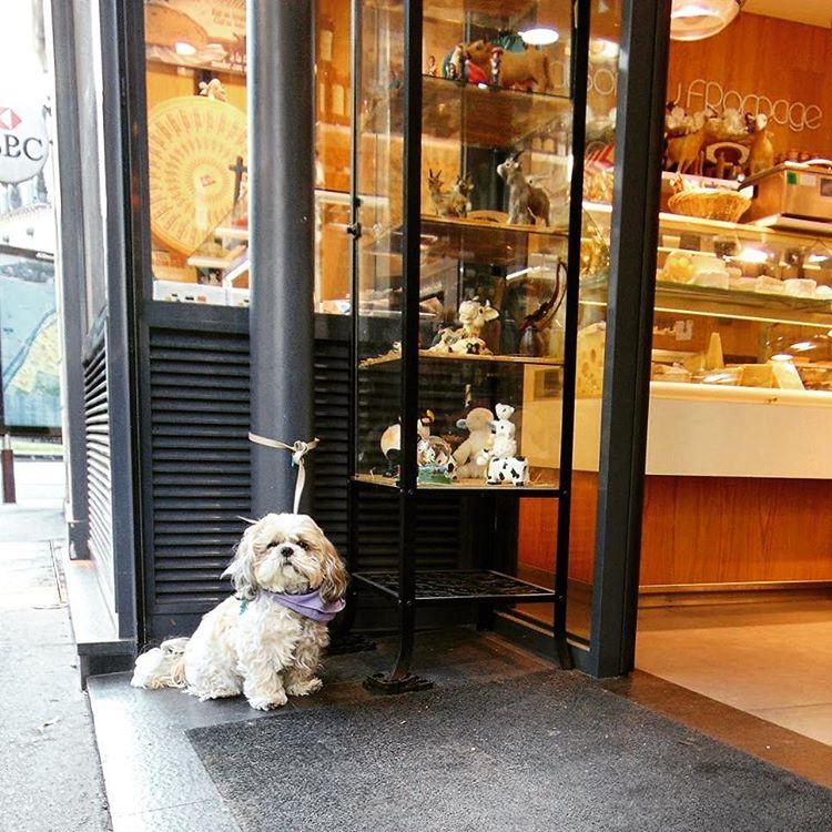Czekam Jattends seemyparis fotowyzwaniejestrudo iglobalphotographers igparis parisphoto parisienne humor igersfrancehellip