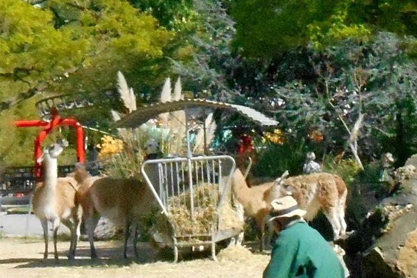 Nauka francuskiego. Wieś w samym środku miasta, czyli zdjęcia z Jardin d'Acclimataion- dawna ferma kartoflana pana Parmentier w Neuilly-sur-Seine, metro Les Sablons.