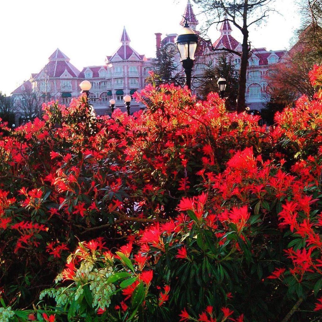 disneyland Disneyland Pary Tam w rodku za tymi bujnymi krzewamihellip