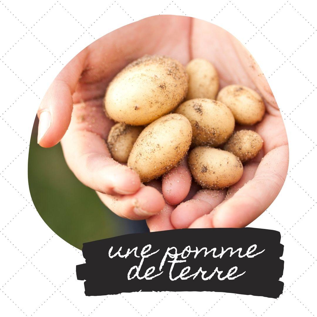 rancuskie danie z ziemniaków, francuska zapiekanka ziemniaczana,